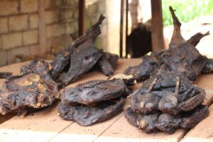 The bushmeat trade used to thrive in Cameroon before the advent of COVID-19 (Picture by Solomon Tembang)