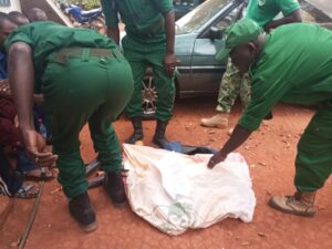 Wildlife enforcement officials packing bushmeat seized from traders (Picture by WWF)