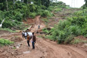 A portion of the forest in Olembe Batchenga destroyed to construct the energy transportation line